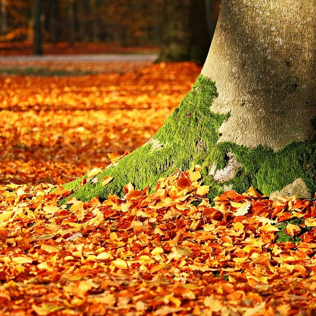 Mossy tree trunk and leaves
