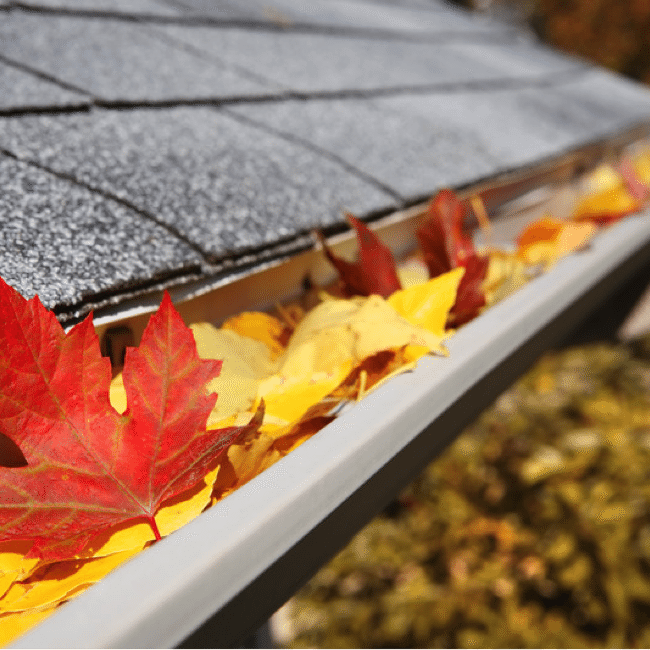 Why Your Gutters Deserve TLC